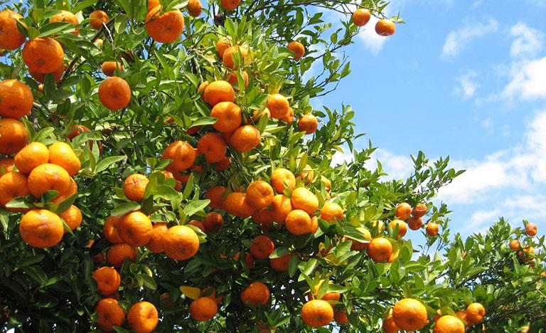 frutta italiana